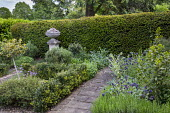 Stone path, Cerinthe major 'Purpurascens' , yew hedge, standard holly tree, Laurus nobilis, low sarcococca hedge