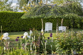 Beehives on lawn, laurel hedge, birch tree, irises, alliums, peonies