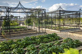 Fruit cages in formal kitchen garden, potatoes on raised beds, plant protection