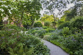 Gravel path through shady garden, Cornus kousa, hydrangea, hosta, Galium odorata, ferns, Polygonatum x hybridum, brunnera, irises, geranium