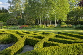 Clipped box parterre, betula