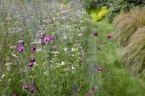 Prairie meadow, Achillea millefolium 'Summer Pastels', Dianthus carthusianorum, Anemanthele lessoniana, mown grass path