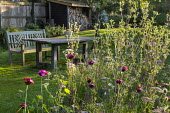 Dianthus carthusianorum, Eryngium planum, wooden table and chairs on lawn, log storage