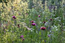 Dianthus carthusianorum, Achillea millefolium 'Summer Pastels', Eryngium planum