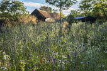 Perennial meadow, Eryngium planum, Achillea millefolium 'Summer Pastels', Stipa gigantea