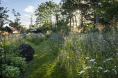 Mown grass paths through perennial meadows, Eryngium planum, Achillea millefolium 'Summer Pastels', Stipa gigantea