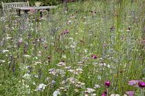 Dianthus carthusianorum, wooden table and bench, Eryngium planum, Achillea millefolium 'Summer Pastels'