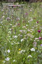 Prairie meadow, Achillea millefolium 'Summer Pastels', Dianthus carthusianorum
