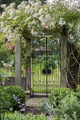 Metal gate under rose arbour