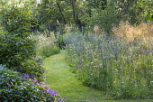 Mown grass path through perennial meadow, Eryngium planum, Achillea millefolium 'Summer Pastels', Stipa gigantea