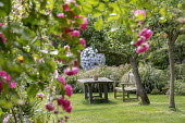 Wooden table and bench on lawn under apple tree, roses, view to Leaf Sphere sculpture by Paul Richardson