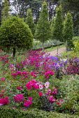Penstemon, campanula, Rosa 'Flower Carpet' and Dahlia 'Mystic Dreamer' in box-edged border, Taxus baccata lollipop standard, Carpinus betulus 'Fastigiata'