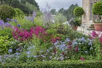 Thalictrum delavayi 'Splendide', penstemon, Allium 'Summer Beauty', Polemonium 'Northern Lights' and campanula in box-edged border