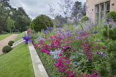 Sloping grass bank, stone steps, clipped Taxus baccata balls and lollipop standards, penstemon, campanula and Rosa 'Flower Carpet' in box-edged border, Thalictrum delavayi 'Splendide'