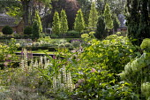 Hydrangea arborescens 'Annabelle', lupins, foxgloves, rows of Carpinus betulus 'Fastigiata'