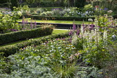 View across formal box-edged borders planted with lupins, echinacea, Stipa gigantea and foxgloves, formal pool