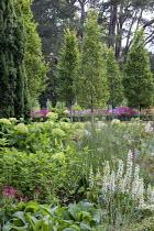 Molinia caerulea subsp. arundinacea 'Transparent', Hydrangea arborescens 'Annabelle', lupins, Carpinus betulus 'Fastigiata'