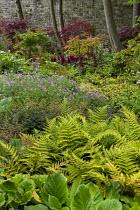 Woodland border, Polystichum polyblepharum, geraniums, astilbes, Acer palmatum