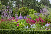 Box-edged border, Thalictrum delavayi 'Splendide', penstemon, Stipa gigantea, Polemonium 'Northern Lights', campanula