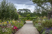 Gravel path through double perennial borders, view to hornbeam in wooden raised bed, achillea, agapanthus, knautia, Rosa 'Flower Carpet'