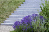 Stone steps, sloping grass bank, lavender