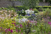 Lythrum salicaria, Filipendula ulmaria, agapanthus, campanula, hydrangea, Salvia 'Love and Wishes', view to white metal bench