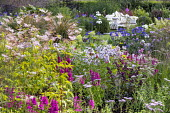 Lythrum salicaria, Filipendula ulmaria, agapanthus, campanula, hydrangea, Salvia 'Love and Wishes', view to bench