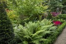 Dryopteris wallichianum, Taxus baccata yew pyramids, astilbe, Acer palmatum, low clipped box hedge