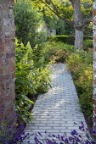 Stone path, hydrangea, Aruncus 'Misty Lace'