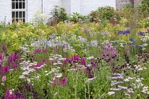 Perennial meadow, Stachys officinalis, Lythrum salicaria, achillea, Scabiosa atropurpurea 'Chile Black', campanula, hydrangea, Filipendula ulmaria
