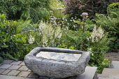 Stone water trough on patio, astilbes, Astrantia major