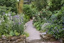 Gravel path, Campanula lactiflora 'Alba', Campanula latifolia, Phyllostachys aureosulcata f. aureocaulis, hydrangeas, Geranium 'Rozanne'