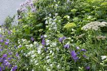 Campanula lactiflora 'Alba', Campanula latifolia, Hydrangea arborescens 'Annabelle'