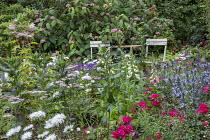 Table and chairs in border, Rosa 'Flower Carpet', Eryngium 'Big Blue', filipendula, achillea, leucanthemum, digitalis, hydrangea