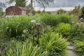 Stepping stone path through border, Angelica sylvestris, miscanthus, crocosmia