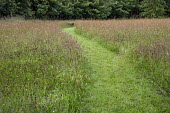 Mown path through long grass wildflower meadow, bench