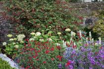 Fuchsia, Hydrangea arborescens 'Annabelle', Salvia 'Royal Bumble', Eryngium 'Big Blue', Erysimum 'Bowles Mauve', lupins