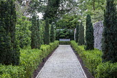 Taxus baccata 'Fastigiata' avenue underplanted with Buxus sempervirens hedge, gravel path, view to multi-stemmed Buxus sempervirens
