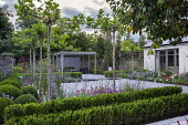 Umbrella trained pleached Platanus × acerifolia trees over terrace, Verbena bonariensis, Scabiosa 'Butterfly Blue', grey painted pergola, outdoor fireplace