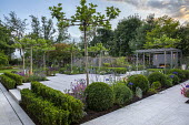 Umbrella trained pleached Platanus × acerifolia trees over terrace, clipped Buxus sempervirens balls and hedge, Verbena bonariensis, stone steps, Erysimum 'Bowles' Mauve'