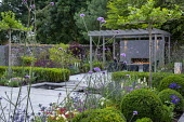 Umbrella trained pleached Platanus × acerifolia trees over terrace, clipped Buxus sempervirens balls and hedge, Verbena bonariensis, stepping stones across formal pool