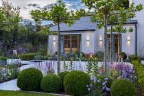 Umbrella trained pleached Platanus × acerifolia trees over terrace, clipped Buxus sempervirens balls, Verbena bonariensis, Scabiosa 'Butterfly Blue', Salvia nemorosa 'Caradonna'
