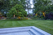 Stone paving, steps to lawn, uplit magnolia