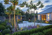 Umbrella trained pleached Platanus × acerifolia trees over terrace, clipped Buxus sempervirens balls, Verbena bonariensis