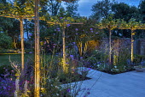 Uplit umbrella trained pleached Platanus × acerifolia trees over terrace, clipped Buxus sempervirens balls, Verbena bonariensis