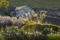 Stipa gigantea, Geranium 'Brookside', Perovskia 'Blue Spire', Pennisetum 'Fairy Tails', Echinacea purpurea 'White Swan'