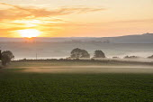 Mist over fields at sunrise