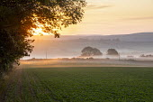 Mists over fields at sunrise