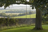 Swing seat hanging from sycamore tree, stone wall