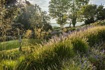 Stipa gigantea, Pennisetum 'Fairy Tails', Geranium 'Brookside', Perovskia 'Blue Spire'